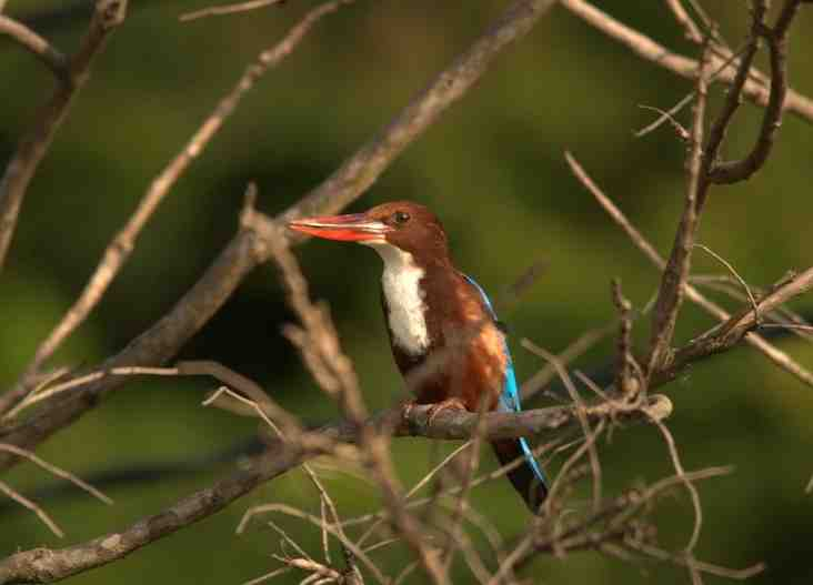 Hue to Bach Ma National Park - Ecological Tour